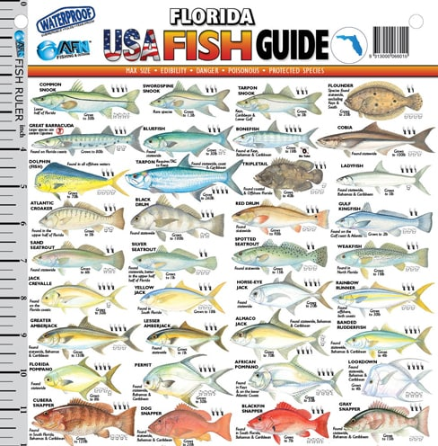 Us fish guides for Florida fishing guides