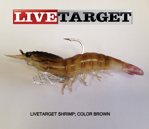 Livetarget saltwater shrimp lives up to live reputation for Fishing with live shrimp