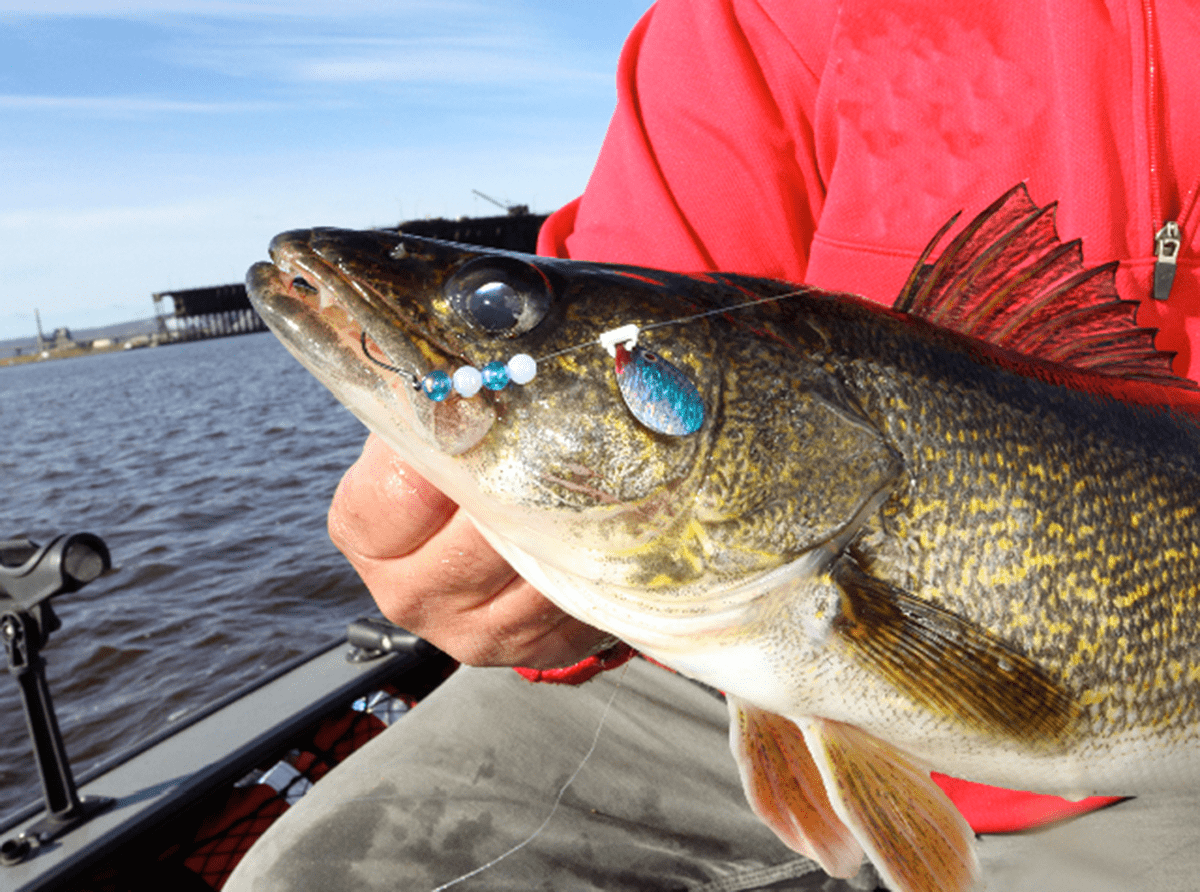 Your ultimate guide to better spinner rigging for walleye for Walleye fishing videos
