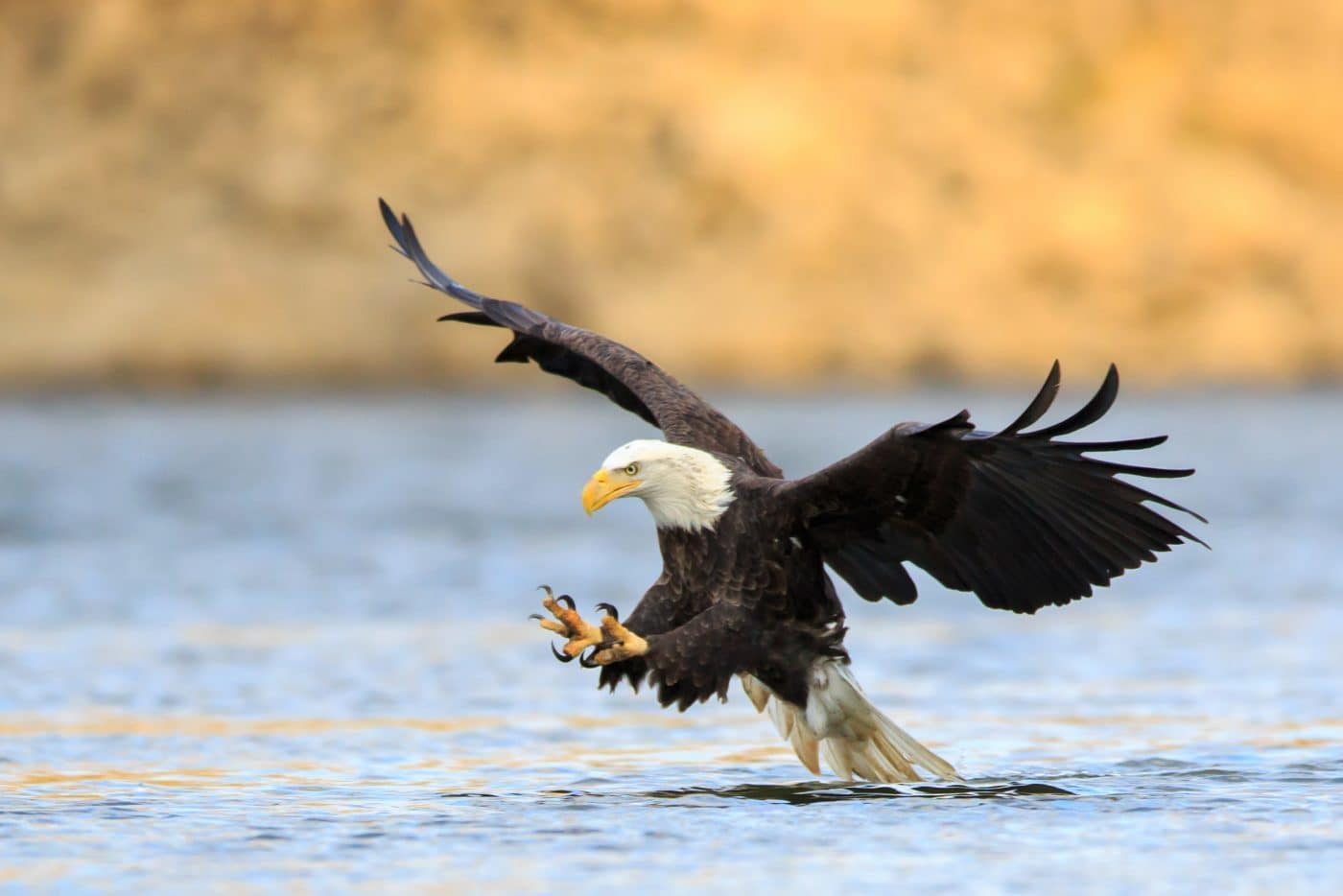 U s fish and wildlife service offers reward for for Us fish and wildlife